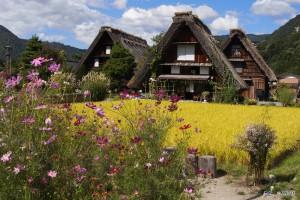 Sus casas estilo gassho-zukuri, están hechas con techos de paja con una inclinación importante para que en invierno la nieve resvale. Copyright JNTO.