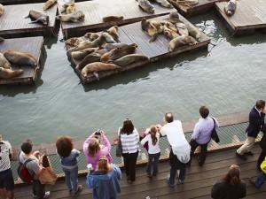 Los leones marinos en el Pier 39.