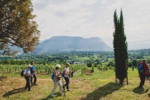 Visitar los viñedos es una de las actividades que realizar en esta región francesa.