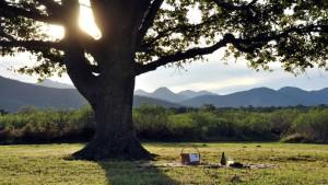 Tarde de picnic en Despeñaperros.