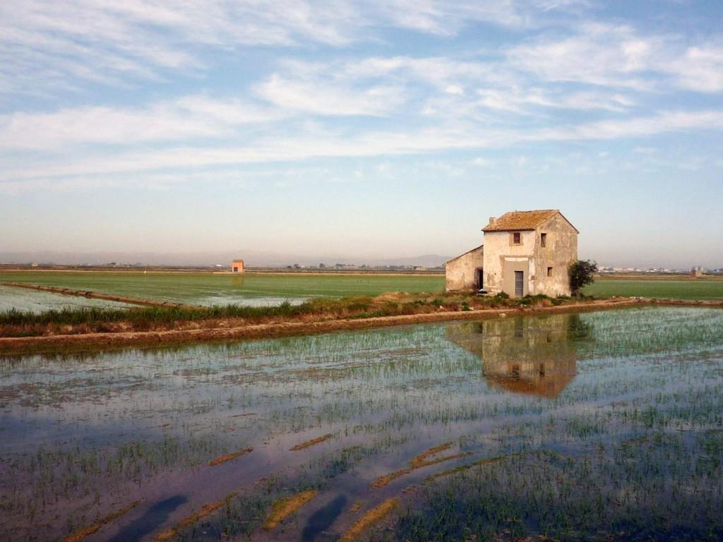La zona está llena de marjales. Es por ello que Valencia sea la cuna del cultivo arrocero en España. Foto: Wikiloc - autor Garmind