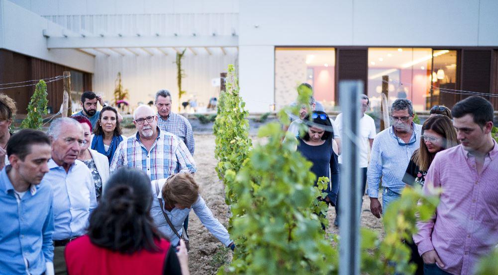 Tras un cóctel de recepción en la terraza de la bodega, se continúa con actividades de vinificación.
