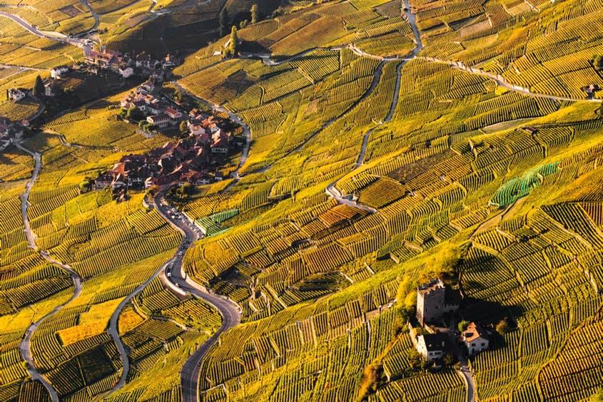 Terrazas en la región del Lavaux, del cantón de Vaud.