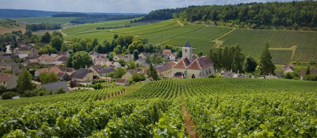 Cote Des Bars, comarca vinícola de Champagne. Foto Didier Guy
