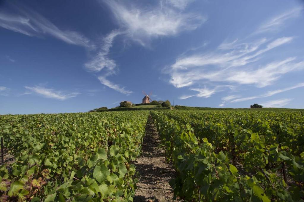 G.H.Mumm cuenta con uno de los más viñedos extensos de la región de Champagne (casi 218 hectáreas). Foto: © Gerard Uferas